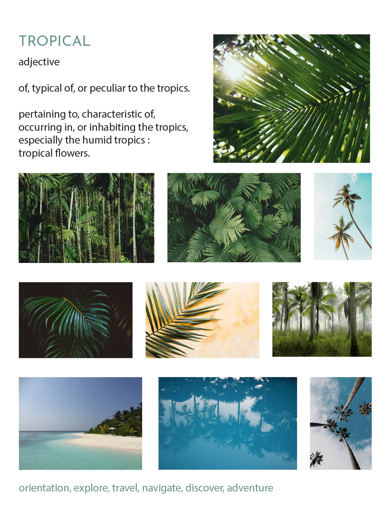 moodboard-tropical